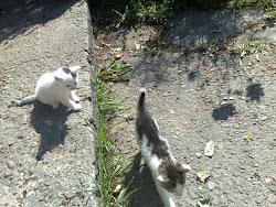 Skaczą kotki na schodki
