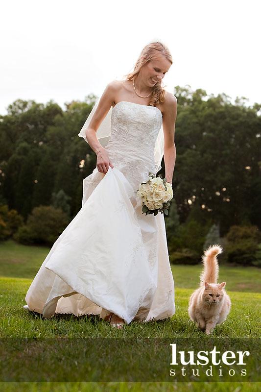 catsparella planning your dream cat wedding