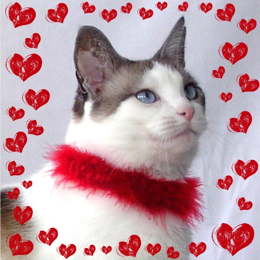 For Valentine S Day Cat Toys : Catsparella cat themed valentine s day gift ideas for