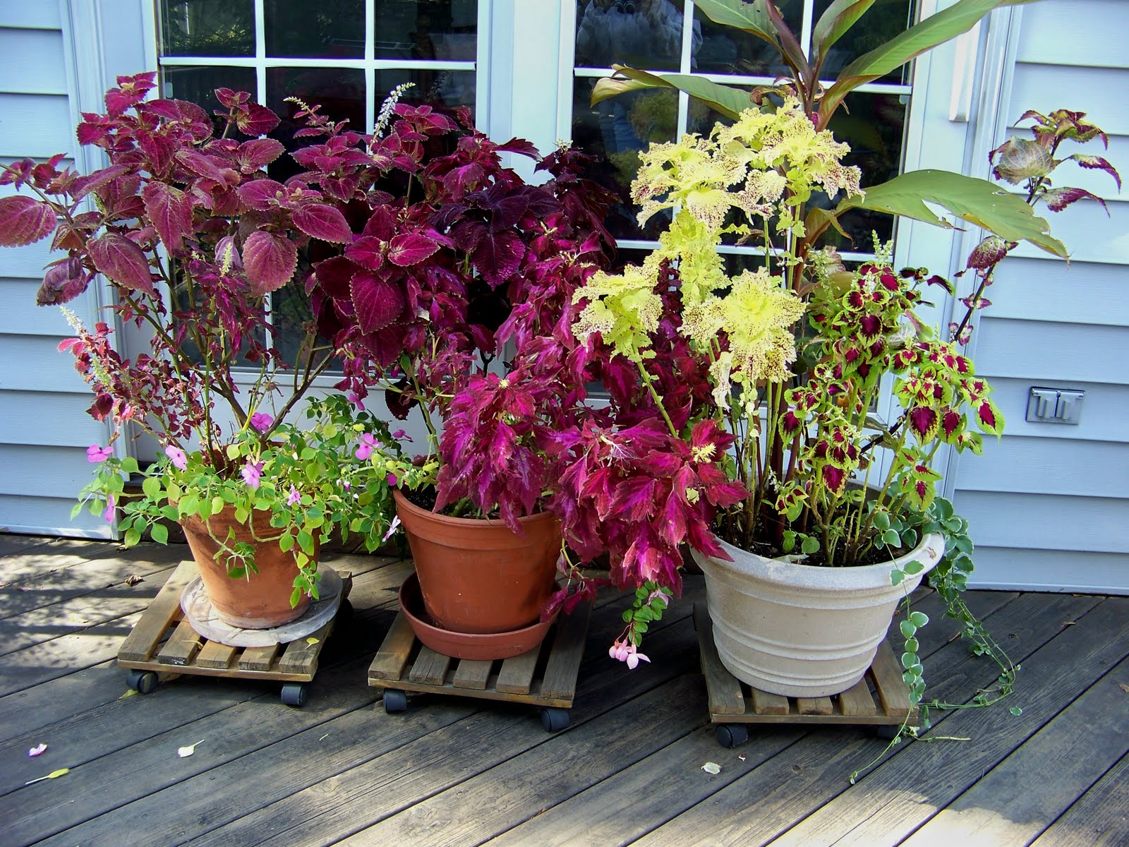 A Garden in Bethlehem PA: Good Bye Potted Plants