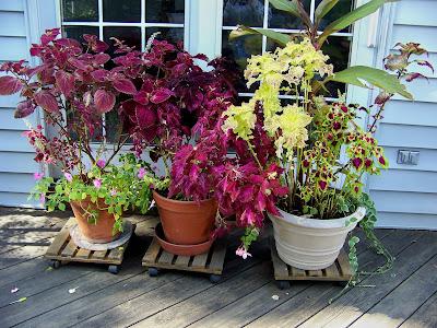 http://3.bp.blogspot.com/_YMxfQty-z5k/TMLAv1Qn4oI/AAAAAAAADH4/VyJ5-gbMXSI/s1600/Garden+10-17-2010_11.jpg