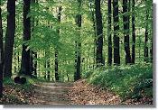 Păduri de foioase