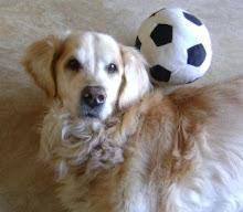 Onze Hond Max