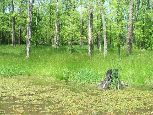 Grassy field in Spring