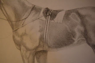 thoroughbred drawing by Ophelia Keys
