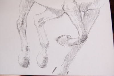 sketch of horse legs by ophelia keys