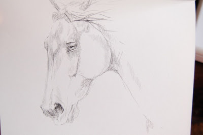 horse portrait by ophelia keys