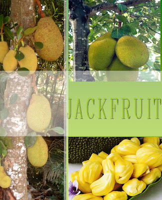 how to make jackfruit juice in malayalam