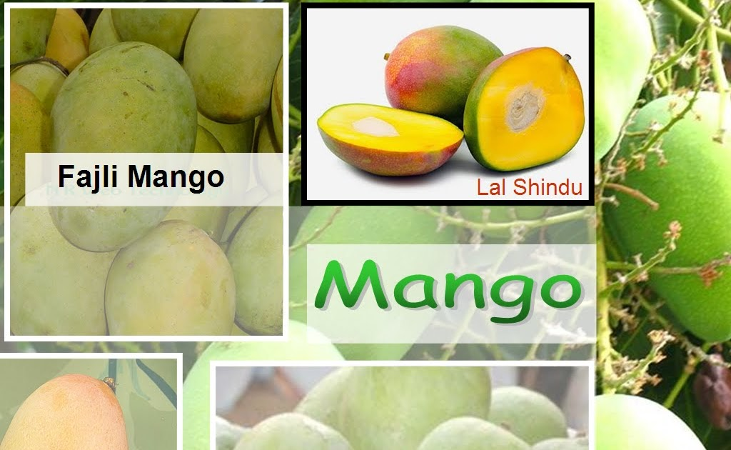 """Top 10 Reasons Why Mango is Called the """"King of Fruits"""""""