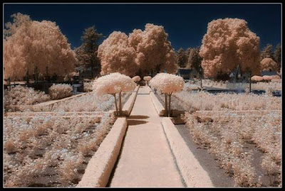 Amazing Infrared Picture Seen On www.coolpicturegallery.net