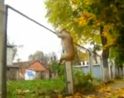 TreT - Parkour Dog From UKRAINE Seen On www.coolpicturegallery.us