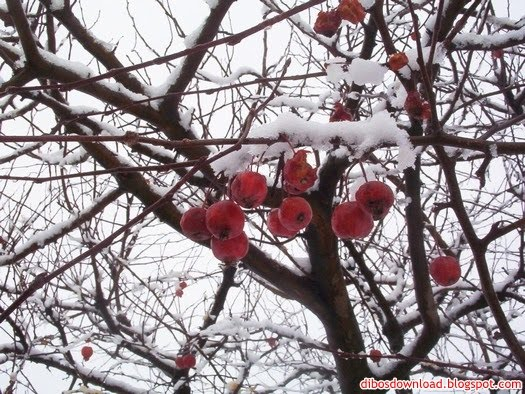 the fruits are covered with snow
