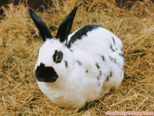 rabbit with black spots