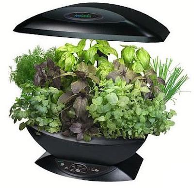 Garden And Beyond Growing Indoor Herb Garden