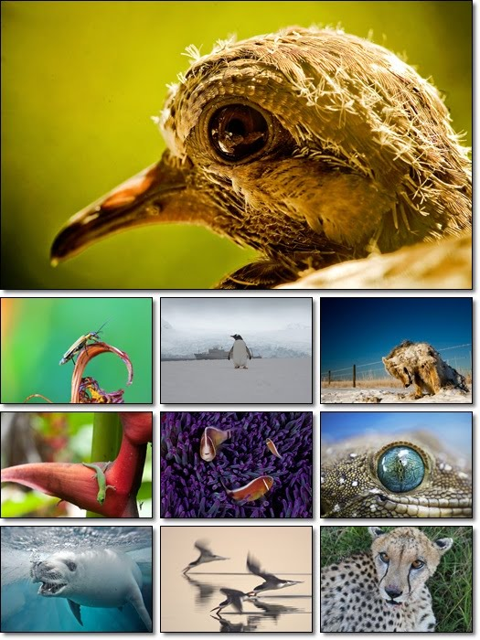 National Geographic Animals Wallpaper