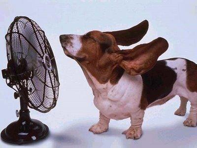 Ups que calor....