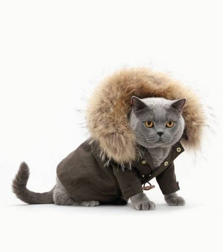 Découvrez le calendrier pour une collection de vêtements pour chats
