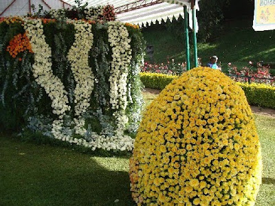 Rose show at Ooty photos