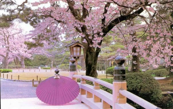 Best tourist spots beautiful tourist spots in the world for Cherry blossom garden japan
