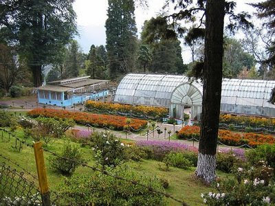 Botanical Garden in Darjeeling