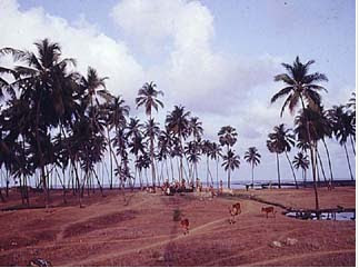 Manori and Gorai Beaches