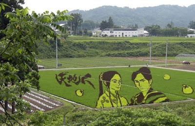 Japan Rice fields