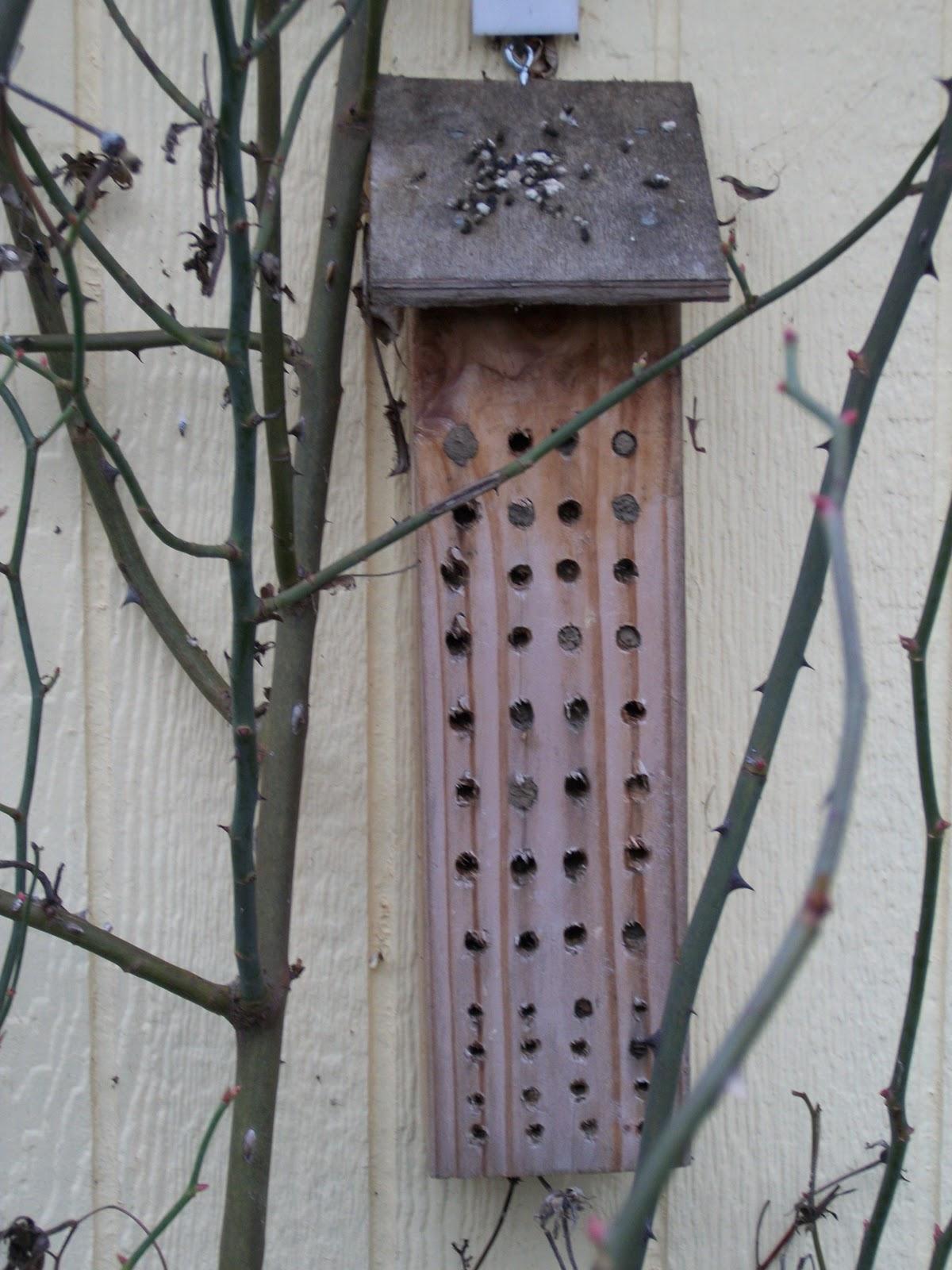 mason bee houses how to build
