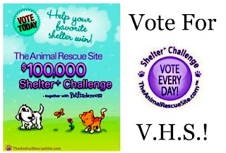 voting the vieques humane society the 1 shelter on the animal rescue