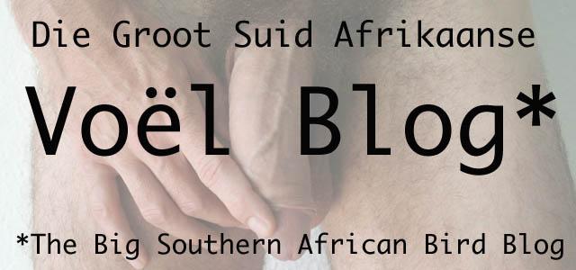Die Groot Suid Afrikaanse Voël Blog