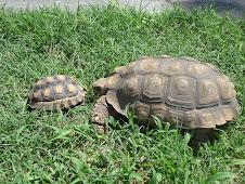 Mis tortugas...