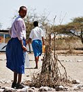 The photo above shows a Maasai school girl watering her tree seedling that is guarded from goats with acacia thorns. She planted this tree for her Roots & Shoots reforestation project at her school in the Lake Eyasi region of NW Tanzania. Photo by Angela Rockett Kirwin (me).