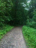 Trail through the green archways of a Teutonic forest