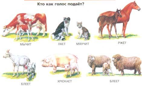 Домашние животные зимой раскраски