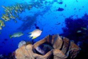 Tasik Ria Dive Resort