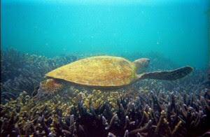 Great Keppel Island Australia