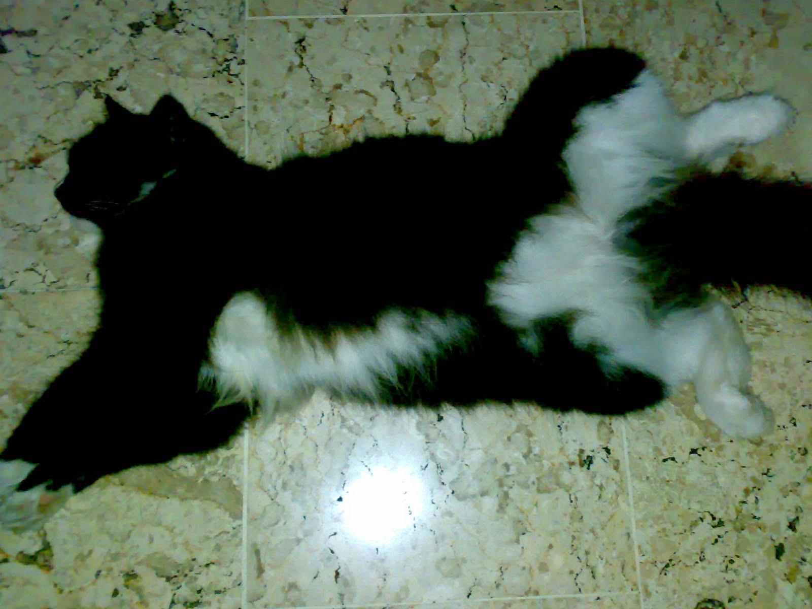Ccasa Felish Kucing Item