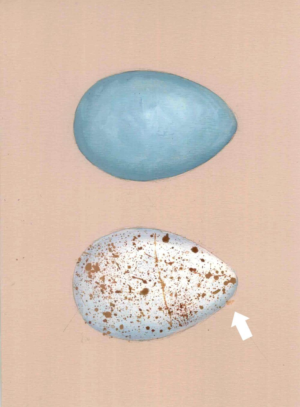 diana mulder egg cellent collections