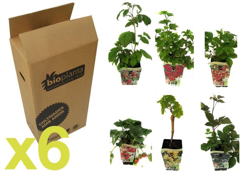 Jardines pequenos plantas arom ticas dise o y for Plantas decoracion de jardines de casas