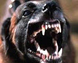 Top 10 razas de perros que están prohibidas tener como masc