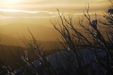 Snowgums at Sunset