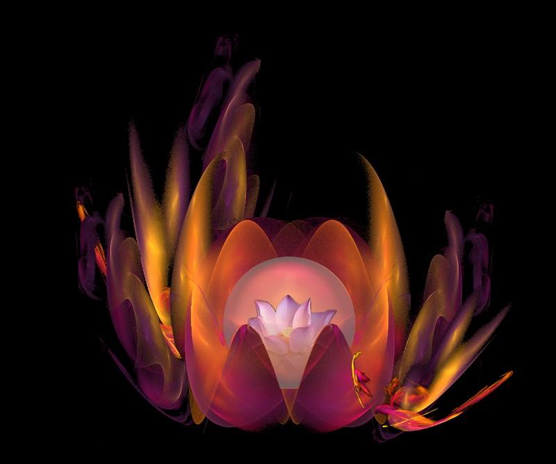 [Fractale+lotus+2.jpg]