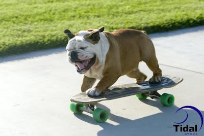 tillman skateboarding