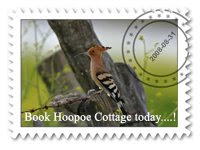 Hoopoe Stamp