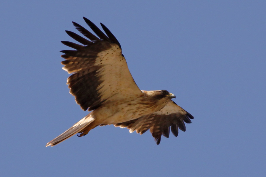 never mind the finnsticks read the booted eagle