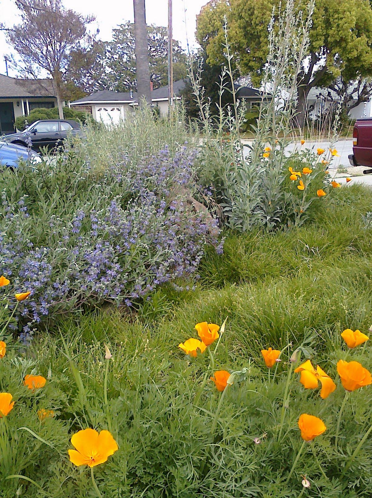 plant native designs native rain garden sunnyvale ca