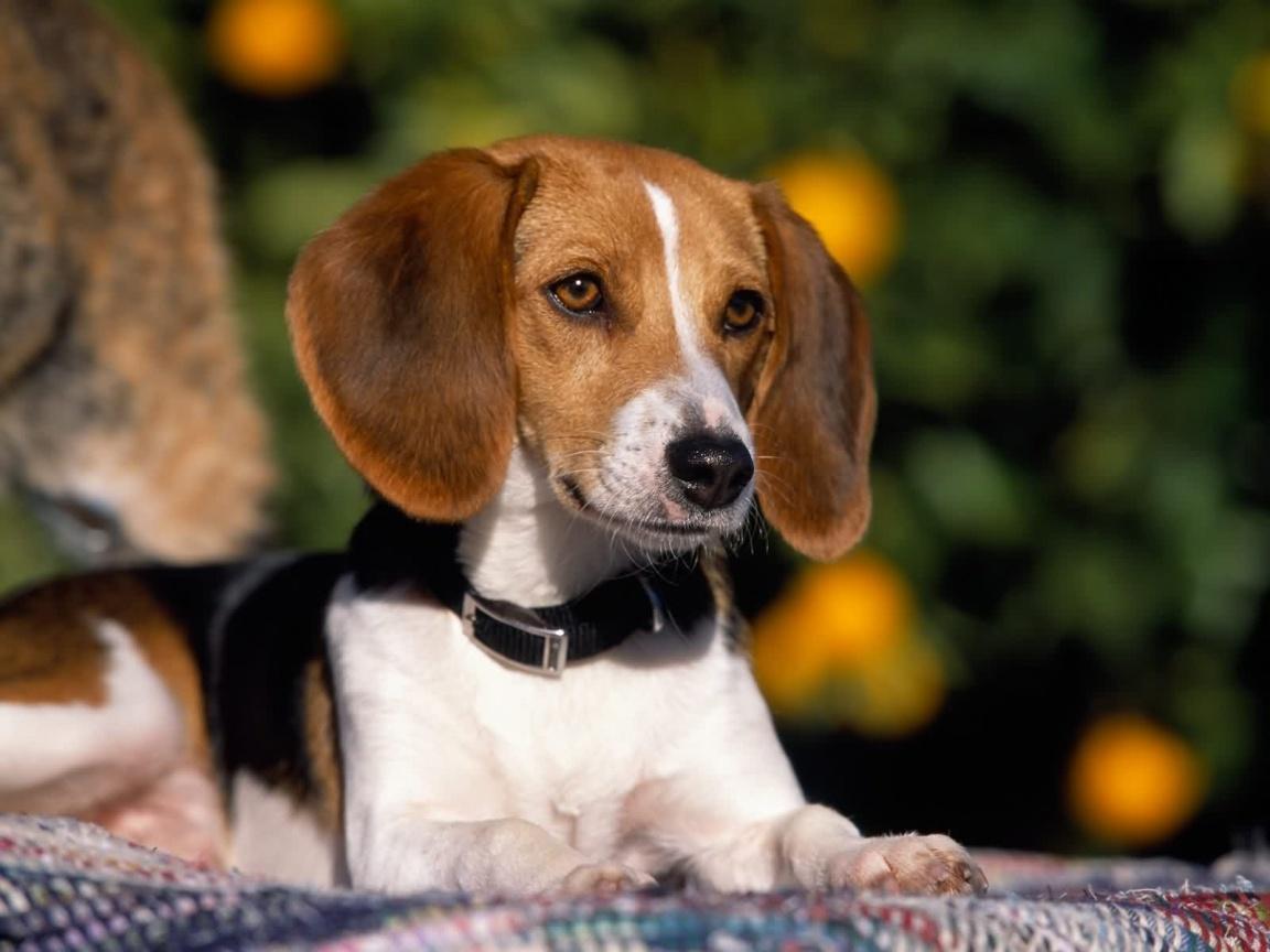 http://3.bp.blogspot.com/_Ym3du2sG3R4/S--o-w1WVQI/AAAAAAAACTQ/4hg2Ax8QNbo/s1600/cute-dog-wallpaper-1152x864.jpg