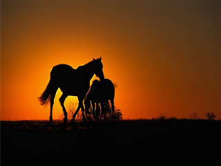 Horses and Sunset wallpaper