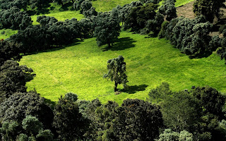 Nature Green Surface wallpaper