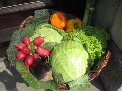 Primeros platos: ensaladas, sopas, cremas y verduras