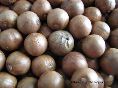 Macadamia Integrifolia Nuts Malaysia